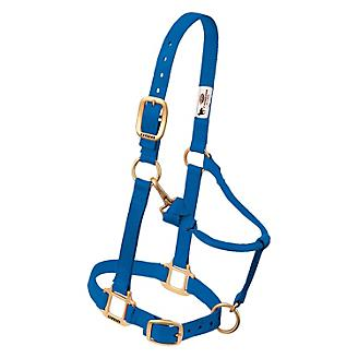 Blue Horse harness at Horse Supply Store